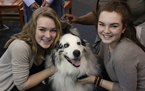 Therapy dogs visit to relieve stress