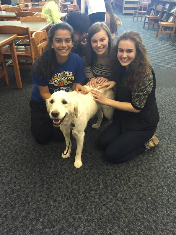 Take a Paws event Returns to RHS