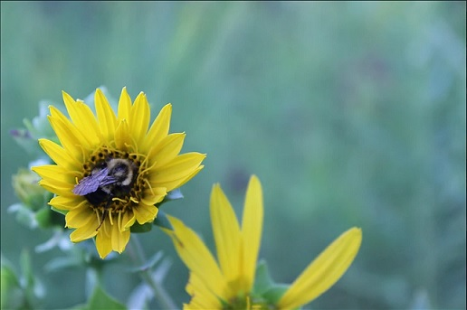 Whats Happening to the Bees (and why we should care)